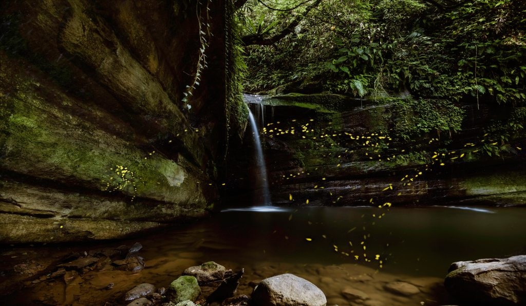Photo: Fireflise by waterfall